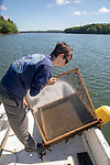 Colin Eimers Checking Oyster Tray, Sasanoa River