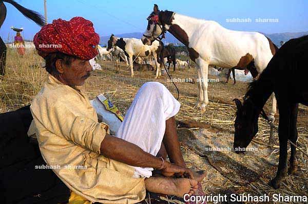 Pushkar cattle fair,Rajasthan,India