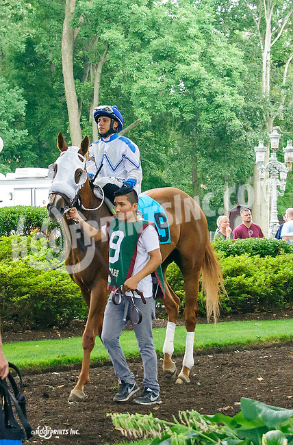 Valueable Charmer before The Dashing Beauty Stakes at Delaware Park on 7/9/16