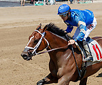 Exulting (no. 11) wns Race 1, Aug. 4, 2018 at the Saratoga Race Course, Saratoga Springs, NY.  Ridden by Junior Alvarado and trained by Kiaran McLaughlin, Exulting finished 1 3/4 lengths in front of Souper Tapit (no. 2).  (Photo credit: Bruce Dudek/Eclipse Sportswire)