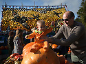 27/10/14<br /> <br /> Eight-month-old Elsa Steele , dressed as a pumpkin, chooses her Halloween squash with mum and Dad, Katie and Graham Steele.<br /> <br /> Families enjoying the half term sunshine flock to buy their pumpkins for Halloween from a cottage-garden in Slindon, near Chichester West Sussex. This year a backdrop made entirely from pumpkins and squashes depicts a scene from the Battle of Britain marking 75 years since the Spitfire came into service. It shows two Spitfires in D Day colours (white stripes on the wings) flying over the spire of Chichester Cathedral and also an RAF roundel.<br /> <br /> All Rights Reserved - F Stop Press.  www.fstoppress.com. Tel: +44 (0)1335 300098
