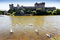 "Pictured: The killer swan, named by locals ""Mr Nasty"" (C) with his family in the pond by Pembroke Castle, west Wales, UK. Sunday 08 July 2018<br /> Re: A vicious killer swan is prowling around Pembroke, determined to see off any threat to his territory by ruthlessly drowning his victims.<br /> So far, he has killed 10 other swans, though many more have been saved from his attacks.<br /> Dubbed by locals ""Mr Nasty""  lives on the Castle Pond by Pembroke Castle. <br /> Bird sanctuary worker Maria Evans says she has watched him at work, drowning other swans, breaking their feet or pushing them over a sluice.<br /> In 2010, another killer swan dubbed ""Hannibal"" had his wings clipped after attacking other swans in the same pond."