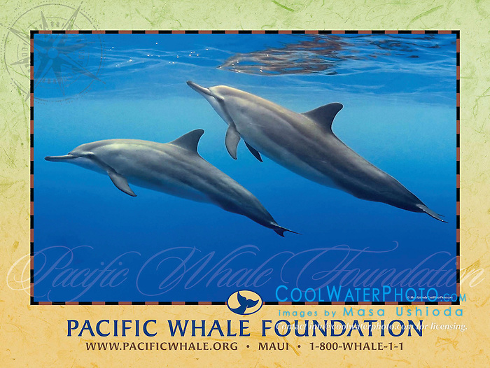 Pacific Whale Foundation 2010 Summer Campaign Poster, adverting use, USA, Image ID: Spinner-Dolphin-Hawaiian-0130