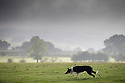 23/08/16<br /> <br /> A foggy morning delayed the start of the 64th Dovedale Sheep Dog Trials today. But the sun soon shone through for some hot competition at  the two-day annual event near Ashbourne in the Derbyshire Peak District.<br /> <br /> <br /> All Rights Reserved, F Stop Press Ltd. +44 (0)1773 550665