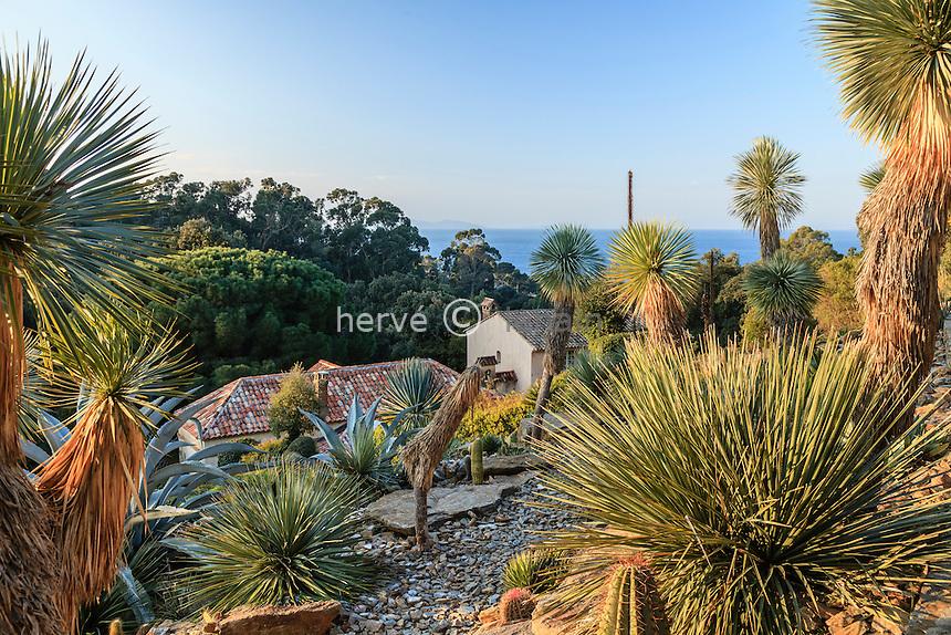 Le domaine du Rayol en février. Dans le jardin américain aride : dominé par les grands Yucca rostrata avec agaves, cactées...<br /> <br /> (mention obligatoire du nom du jardin & pas d'usage publicitaire sans autorisation préalable)