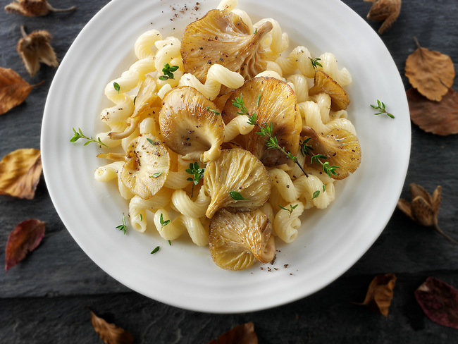 Sauteed Yellow Oyster mushroom with Cavatappi pasta also known as cellentani, amori, spirali, tortiglioni, or fusilli rigati