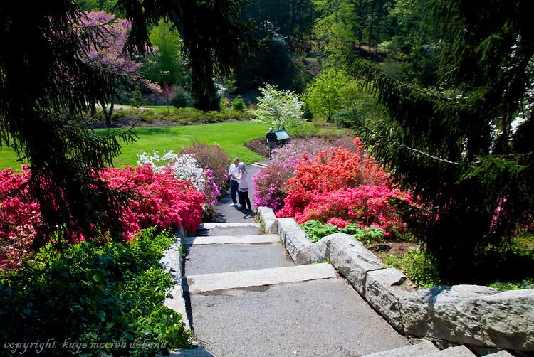 Biltmore Estate Spring Images at the Azalea Garden
