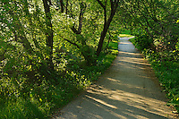 Trail in the Seine River Forest.<br /> Winnipeg<br /> Manitoba<br /> Canada