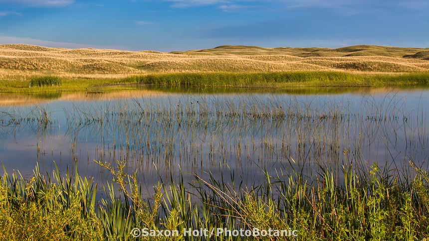 Surface water ponds from Ogallala Aquifer, Merz Ranch, Sand Hill Prairie, Nebraska