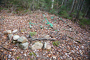 "Poor ""Leave No Trace"" habits near Ledge Brook in the White Mountains, New Hampshire."