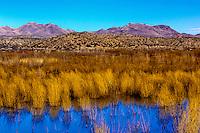 Bosque del Apache National Wildlife Refuge, near Socorro, New Mexico USA