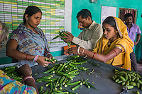 Collection centre workers grade vegetables and pack them for sale in the collection centre in Machahi village, Muzaffarpur, Bihar, India on October 27th, 2016. Non-profit organisation Technoserve works with women vegetable farmers in Muzaffarpur, providing technical support in forward linkage, streamlining their business models and linking them directly to an international market through Electronic Trading Platforms. Photograph by Suzanne Lee for Technoserve