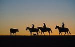 November 17, 2011 -- Meade, KS, U.S.A  -- Safemeat: Bobbi Ann Craine, Liffa Crain, and Dr. Scott Crain DVM, along with herding dog, Wrangler, move cattle at sunset on the Crain's farm near Meade, Kan., Thursday, November 17, 2011. .Photo by Craig A. Hacker, Freelance