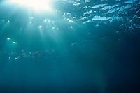 Sunbeams penetrating the water's surface.