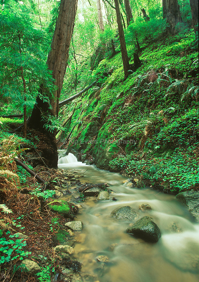Soberanes Creek, Big Sur, CA