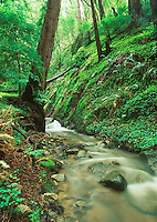 Soberanes Creek, Big Sur, CA