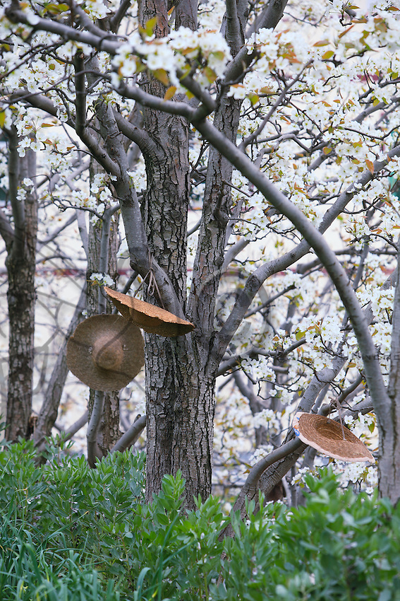 Les paysans ont laissé leurs chapeaux suspendus à un arbre.///The farmers have left their hats hanging on a tree.