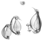 X-ray image of penguins (black on white) by Jim Wehtje, specialist in x-ray art and design images.