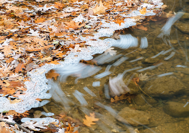 Leaves collect of the surface of the water below the spillway at Stirling Pond, water flowing over the spillway creates foam that moves and flow with the current, Morton Arboretum, DuPage County, Illlinois