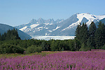 alaska10133 Alaska, Juneau: Mendenhall Glacier at Juneau.  Fireweed wildflowers. .Photo #: alaska10133  .Photo copyright Lee Foster, 510/549-2202, lee@fostertravel.com, www.fostertravel.com..