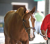 The Fasig-Tipton Saratoga Select Yearling Sales will be held Aug. 2 and 3 at the newly renovated pavilion on East Ave. The Saratoga Special will bring you all the gavel to gavel action, starting with the arrival of the horses.