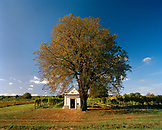AUSTRIA, Oggau, small Turkish Crypt rests under a tree on the edge of a vineyard, Burgenland