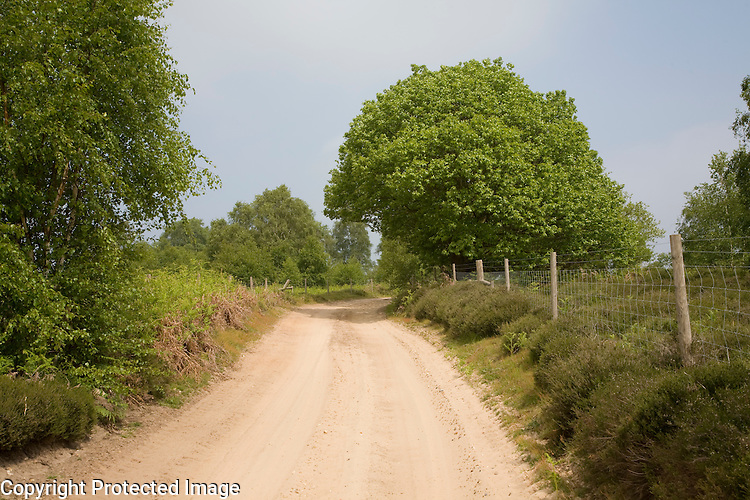 Sandy track crossing Sandlings heathland, Sutton, Suffolk, England