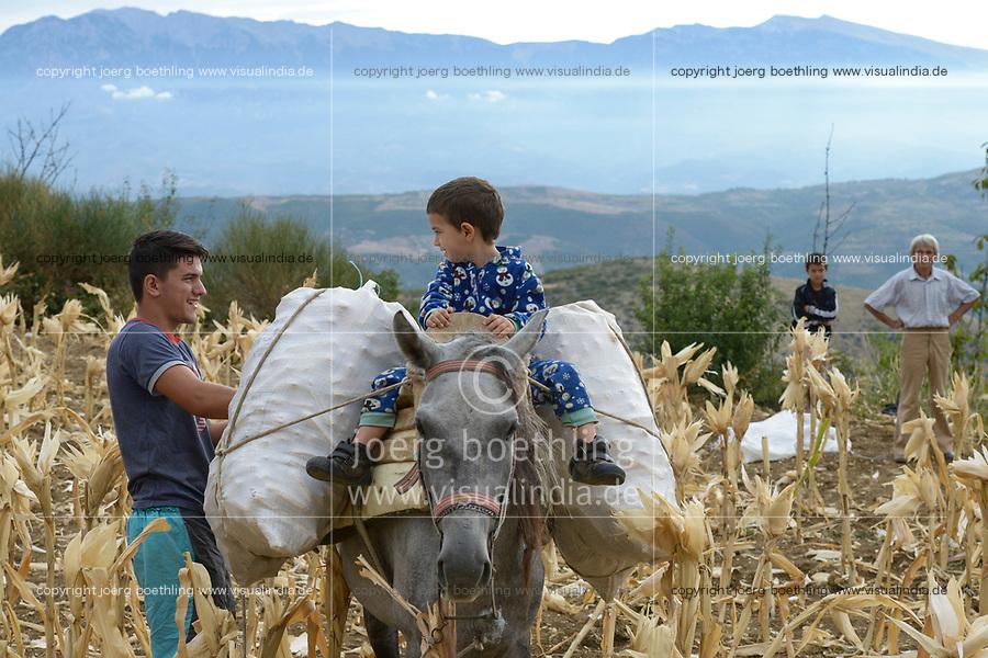 ALBANIA, Berat , small scale farmer harvest maize in the mountains / ALBANIEN, Berat, Kleinbauern ernten Mais in den Bergen