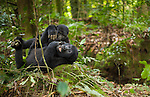 Mountain gorillas, Volcanoes National Park, Rwanda<br /> <br /> Canon EF 50mm f/1.4 USM Lens