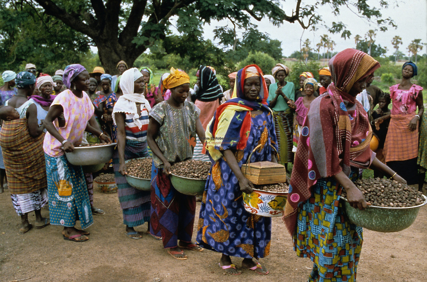 Village women bringing baskets full of fruit for processing into shea butter