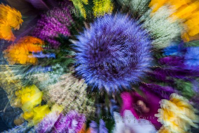 Venezia L'orto sinergico coltivato da Michele Savorgnano. Sono 300 le piante i fiori coltivati in questo spazio. Alcuni fiori che Michele porta nei migliori ristoranti di Venezia.
