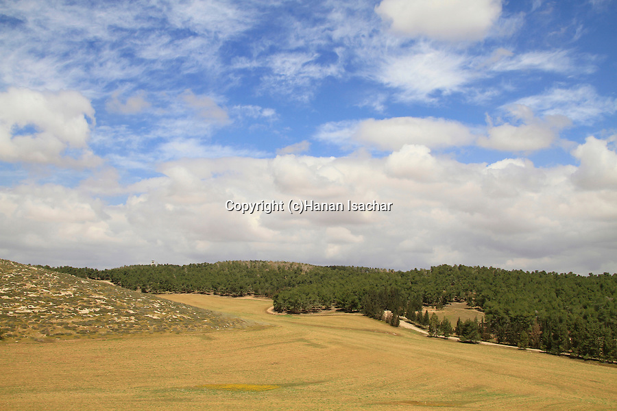 Israel, Shephelah, a view of Lahav forest from Hurvat Rimon