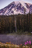 Below Mt. Rainier