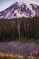 Below Mt. Rainier