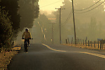 Biker at sunrise on road in the Carneros Region, Napa Valley, Napa County, California