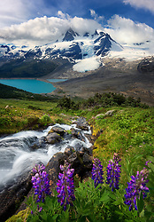 A small cascading stream leads towards mountains, glaciers and lake, complemented by a patch of wild lupines.