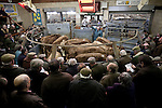 04/03/2011 Photo © Tim Gander. All rights reserved. Tel: 07703 124412. Standerwick livestock market, Frome, Somerset.