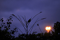 Single bird perched on bare limbs of a shrub after sunset with overhead street light proving the illumination.