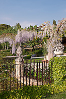 Heavy wisteria flowers hanging from the pergola located on the terrace of this large Italian garden