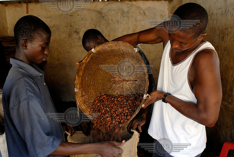 Kuapa Kokoo farmers bagging cocoa beans for weighing. Kuapa Kokoo is a cocoa farmers' co-operative with 45,000 members spread across the forests of Kumasi. The farmers jointly own a 45 percent stake in the company, which is also a major stakeholder in the London-based fair trade company Divine Chocolate Ltd..
