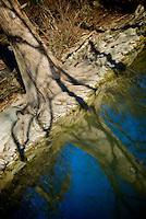 Tree, McKinney Falls 034