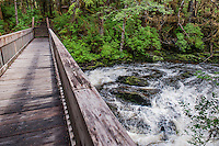 Wooden footbridge over a rushing stream in the temperate rainforest of Tongass National Forest, Ketchikan, Alaska, USA