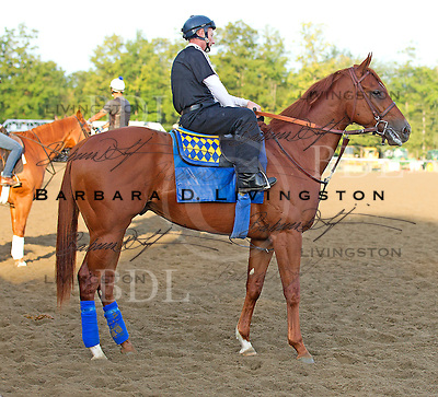 Coil - winner of the Haskell Invitational