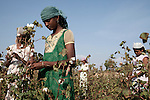 THE PRICE OF INDIAN COTTON