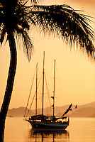 Sunrise silhouette with palm tree, sailboat and seagull. St. Thomas, US Virgin Islands Vessop Bay.