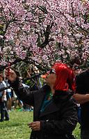 SAO PAULO, SP, 05 AGOSTO 2012 - FESTA DAS CEREJEIRAS - 34ª edição da Festa das Cerejeiras no Parque do Carmo regiao leste da capital paulista . FOTO: VANESSA CARVALHO / BRAZIL PHOTO PRESS)