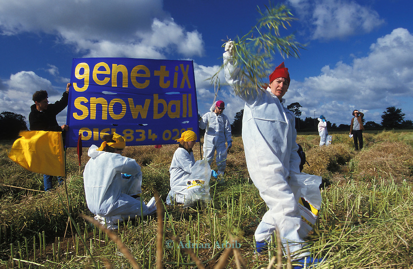 Genetix Snowball protesters against GMO's tear up GM oil seed rape from a field in  Oxfordshire.