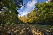 Autumn woodland glade, Stoke wood, Oxfordshire.