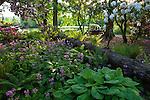 BWC Rhododendron Garden
