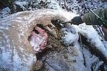 Dead Elk